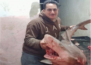صورة مع سمكة قرش تثير الجدل.. وصاحب مطعم: هتقدم بشكوى للأضرار المادية