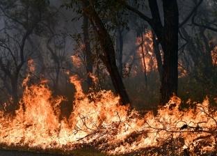 عاجل.. اندلاع حريق غابات في مقاطعة يوننان الصينية