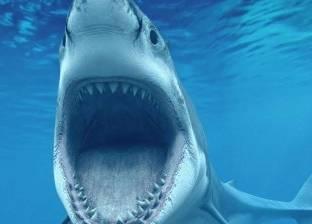 """""""ابحث مع الشرطة"""".. طوارئ بسبب سمكة قرش مفقودة: زرقاء ومتوحشة"""