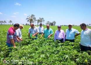 ندوات إرشادية لمزارعي القطن في دمنهور وإدكو
