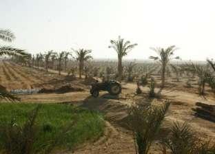 """خبراء اقتصاد زراعي عن """"المليون فدان"""": يسد جزء من الفجوة بالإنتاج بشرط توافر مياه جوفية"""