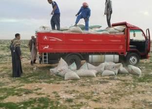 الأمن يسمح بإدخال 50 سيارة محملة بالأعلاف لمدينتي الشيخ زويد ورفح