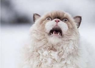 """""""مضحكة للغاية"""".. كيف تواجه الحيوانات الأليفة الثلوج لأول مرة؟"""