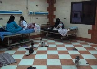 شهر رمضان فى «غرفة 4» بمستشفى «بولاق الدكرور»: القطط تتقاسم طعام الإفطار مع الأطفال والأمهات