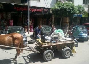 """""""حي المنتزه أول"""" بالإسكندرية يشن حملة لمطاردة """"النبيشة"""""""