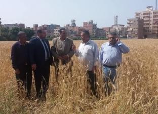 """وكيل """"زراعة دمياط"""" يتابع استعدادات موسم حصاد القمح"""