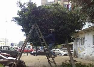 """""""مناخ بورسعيد"""" يستكمل أعمال تطوير المسطحات الخضراء"""