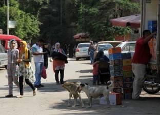 """مواطنون يتعرضون لـ""""العض"""" من كلاب ضالة بالرويسات: """"المستشفى مفيهاش مصل"""""""