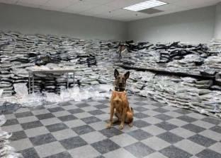 كلب يحبط عملية تهريب مخدرات بملايين الدولارات