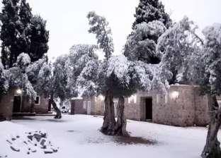 صور.. الثلج يزين أشجار مدينة سانت كاترين