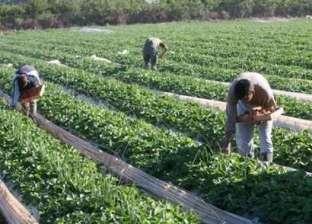 كيف تتفادى مصر تكرار حظر تصدير الحاصلات الزراعية المصرية لدول الخليج؟
