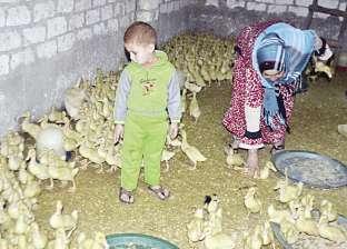 حظر بيع الطيور الحية يعيد العشش إلى الأسطح: مش هناكل «المجمدة»