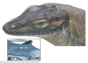 """عاشت على الأرض منذ 49 مليون سنة.. """"علماء يكتشفون سحلية بـ4 عيون"""""""