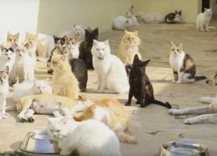 القصة الكاملة لـ«مشاهد الرعب في الساحل».. 20 قطة أكلت «عجوزاً» ربّاها