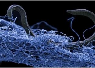 دراسة: هناك ملايين المخلوقات تعيش معنا على الأرض ولا نعرف عنها شيئا