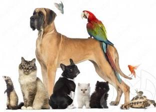 لماذا تسبب الحيوانات الحساسية لبعض الأشخاص؟
