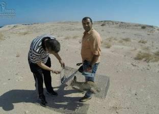 بالصور  «شباب بتحب مصر» تشارك في إطلاق ثعلب وثعبان لبيئتهما الطبيعية