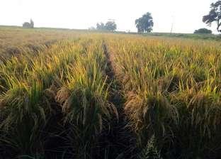"""إرشادات """"الزراعة"""" لمواجهة تأثير الموجة الحارة على المحاصيل الصيفية"""