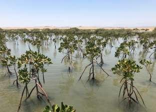 """""""الزراعيين"""": التوسع في زراعة أشجار القندل لحماية شواطئ البحر الأحمر"""