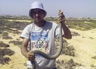 مكتب استيراد وتصدير للتجارة فى الثعابين: «أكل العيش سم»