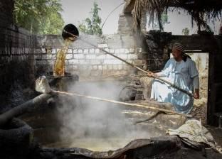 بالصور| العسل الأسود.. «الحلو اللى خارج من عرق جبين الفلاحين»
