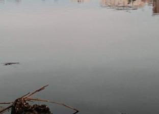 بالصور| أسماك نافقة في دمياط.. وذعر بين المواطنين