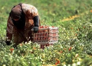 """""""التنمية الزراعية"""": إجراءات كويتية مشددة على منتجات مصر بسبب المبيدات"""
