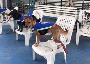 أستاذ بالأزهر: تربية الكلاب باهظة الثمن «بيولد حقد طبقي»