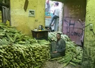 """""""زراعة كفر الشيخ"""" تبدأ في حصاد حقول """"الذرة الشامية"""""""