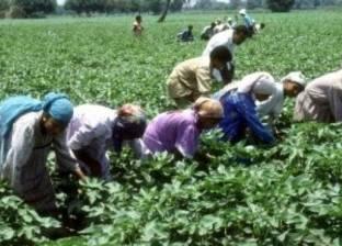 """""""الزراعة"""": استخدام المرشدين الزراعيين في رفع الوعى بالقضية السكانية"""