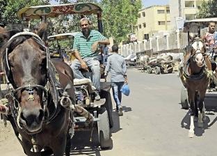 لما تصرف على الحصان أكتر من ولادك.. يبقى أهلاً بـ«الكارتّة»