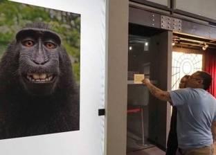"""""""القرد المبتسم"""" سيلفي هز المحاكم الأمريكية.. والحكم مفاجأة؟"""