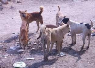 بسبب كلب.. نقل 9 أطفال إلى مستشفى بلقاس المركزي بالدقهلية