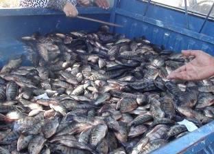 جهاز تعمير سيناء يعرض الخضروات والأسماك بتكلفة أقل 50% من السوق