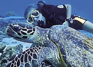 «سيلفى السلاحف» ينعش سياحة الرحلات البحرية فى الغردقة