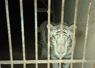 """داخلها """"أسد وفهد وتمساح"""".. ضبط أكبر مزرعة للإتجار في الحيوانات البرية"""