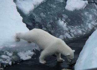 بالصور| دب قطبي يُرهب غواصة نووية روسية