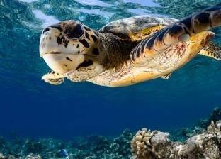 وظيفة وفسحة.. منتجع فاخر في المالديف يطلب متدربين لرعاية السلاحف