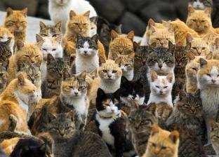 """دواء لعلاج مرض يصيب القطط """"قد ينفع"""" في علاج كورونا"""