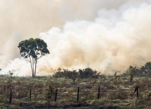"""غابات الأمازون تثير """"حرائق عالمية"""".. اتهامات وتظاهرات واجتماعات طارئة"""