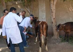 تحصين وعلاج 200 ألف حيوان وضبط 39 مخالفة خلال حملات بأسيوط