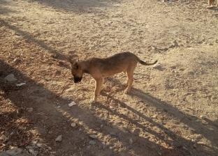 """""""الإفتاء"""" تبيح قتل الكلاب الضالة: إذا هددت أمن المجتمع وسلامة المواطنين"""