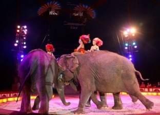 بالفيديو| فيل يسقط على الجمهور في سيرك ألماني