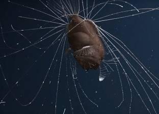 بالفيديو| تصوير سمكة نادرة في أعماق المحيط لأول مرة