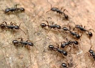 لغز حير «الأطباء والدجالين».. قصة الفتاة «مي» التي يخرج النمل من عينها