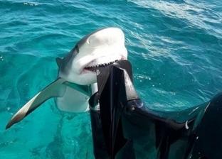 فيديو مرعب.. سمكة قرش تمنع قاربا من الإبحار
