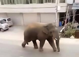 بعد فشله في الحصول على زوجة.. فيل غاضب يدمر المنازل بالصين