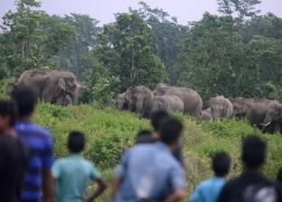 قطيع أفيال يهاجم قرية