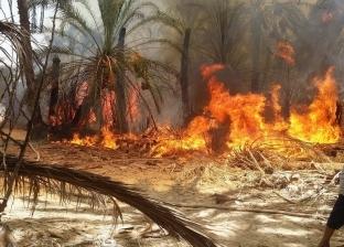 السيطرة على حريق محدود بمزرعة وزارة الزراعة في سوهاج
