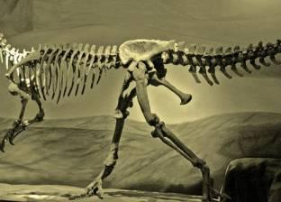 اكتشاف 300 حفرية لآثار أقدام ديناصورات تعود لـ120 مليون عام في الصين